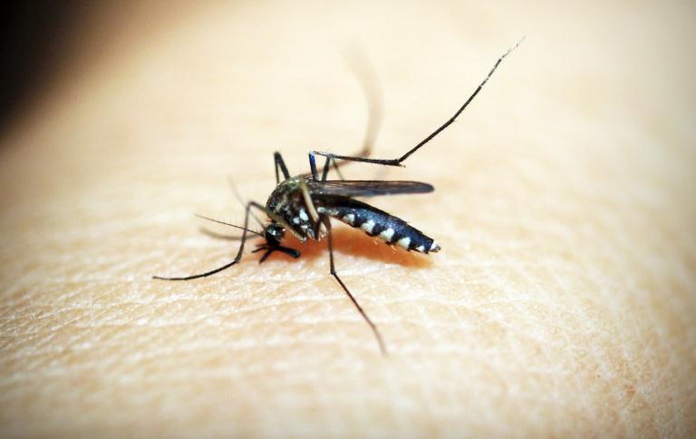 Zaščita pred žuželkami v stanovanju